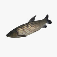 3ds max grass carp fish