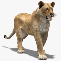 max lioness rigging animation cat