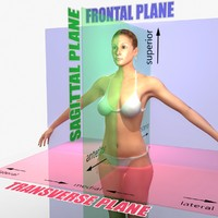 Planes of Motion Anatomical Charts