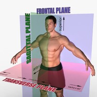 planes body rigged male ma
