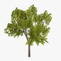 tree 07 3d model