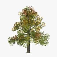 3d tree 13