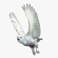 snowy owl 3d lwo