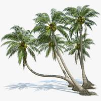Coconut Palms Set