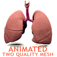Realistic Lungs Animated