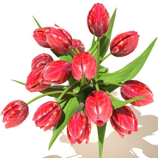 maya red tulips bouquet v3