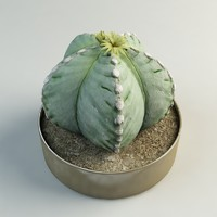 3ds flowering cactus pot