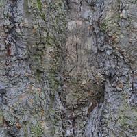 treetrunkbig