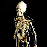 3d model of skeleton human body