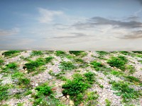 Rocky ground with weeds 1