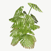 monstera type 2 3d model