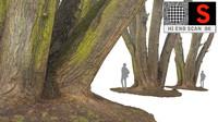 3d max acacia tree