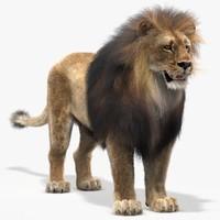 maya lion fur