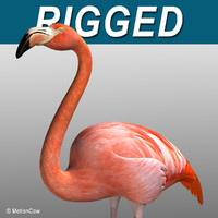 Flamingo ( Folded Wings)