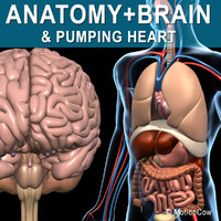 Anatomy & Brain