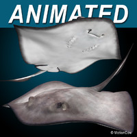3d realistic stingray model