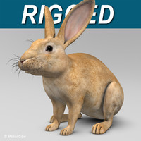 Rabbit ( Brown )