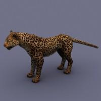 max animal leopard