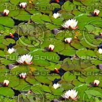 Lilypads 8