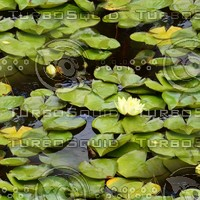 Lilypads 7