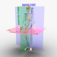 3d model planes body skeleton