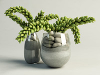 maya cactus succulent glass