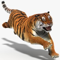 3d amur siberian tiger cat