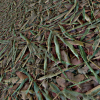 Ground Leaves Texture