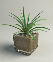 3d model aloe glass pot