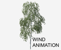 tree animation betula pendula max