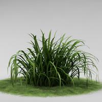 plant garden 3d model