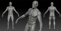3d anatomy character model