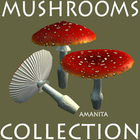 free max model forest mushrooms