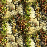 Stone wall with vine 11