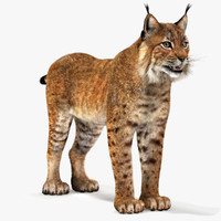 3ds max eurasian lynx fur