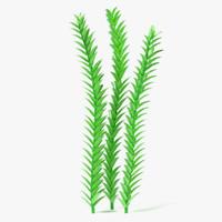 3d model aquatic plant