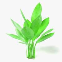 aquatic plant obj