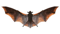3d bats mammals wings
