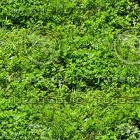 Grass 22
