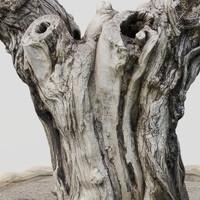 tree scan 3d model