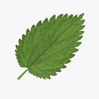 3d crenate leaf model