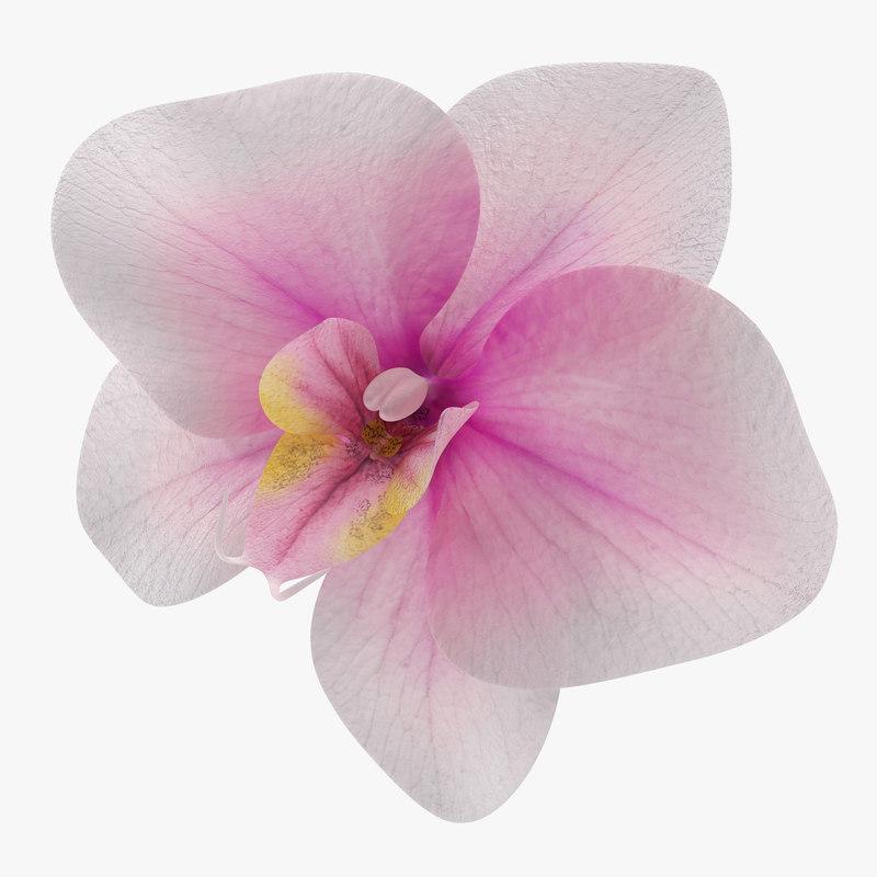Orchid_Flower_3d_model_00.jpg
