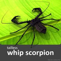 whip scorpion 3d model