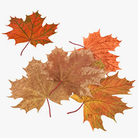 autumn maple leaves 3d c4d