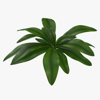 tropical plant glauca cordyline 3d 3ds