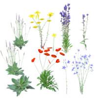 obj european wildflowers 1