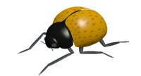lady bug max