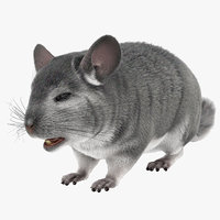 chinchilla fur 3d model