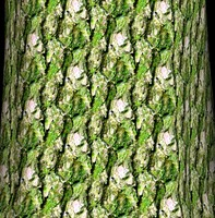 Mossy tree bark 2