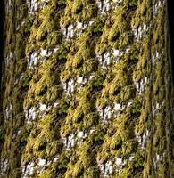 Mossy tree bark 4